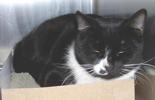 cat.2001